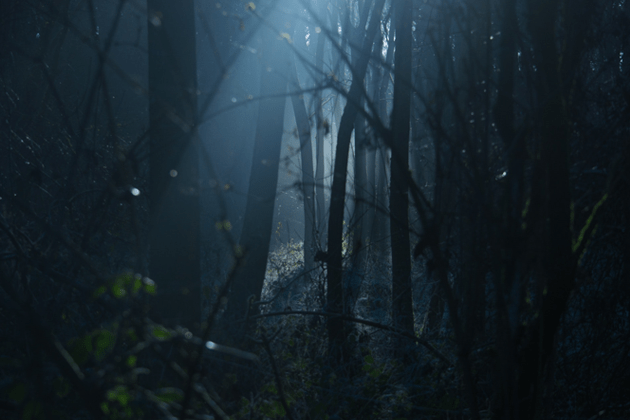 Panasonic Experience Horrorfilme Wald