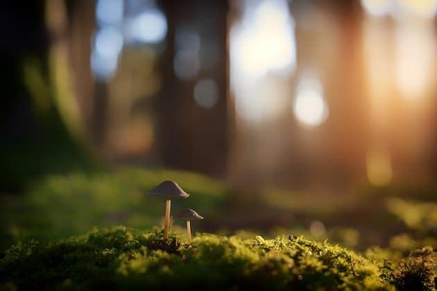 Leckere Pilze