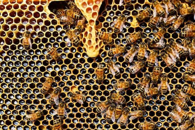 Gesunder Honig