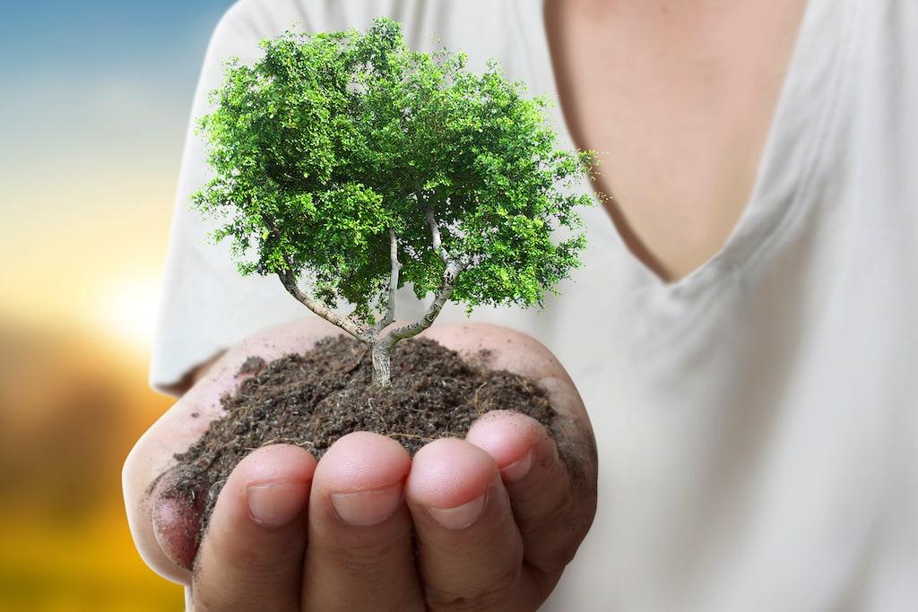 Klimafreundlicher Ökostrom