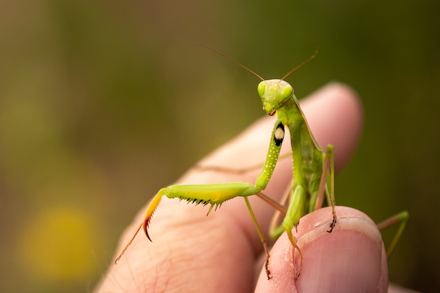 Insekten fotografieren